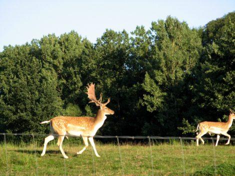 Jeleni v čisté Bavorské přírodě