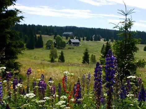 o NP Bavorský les